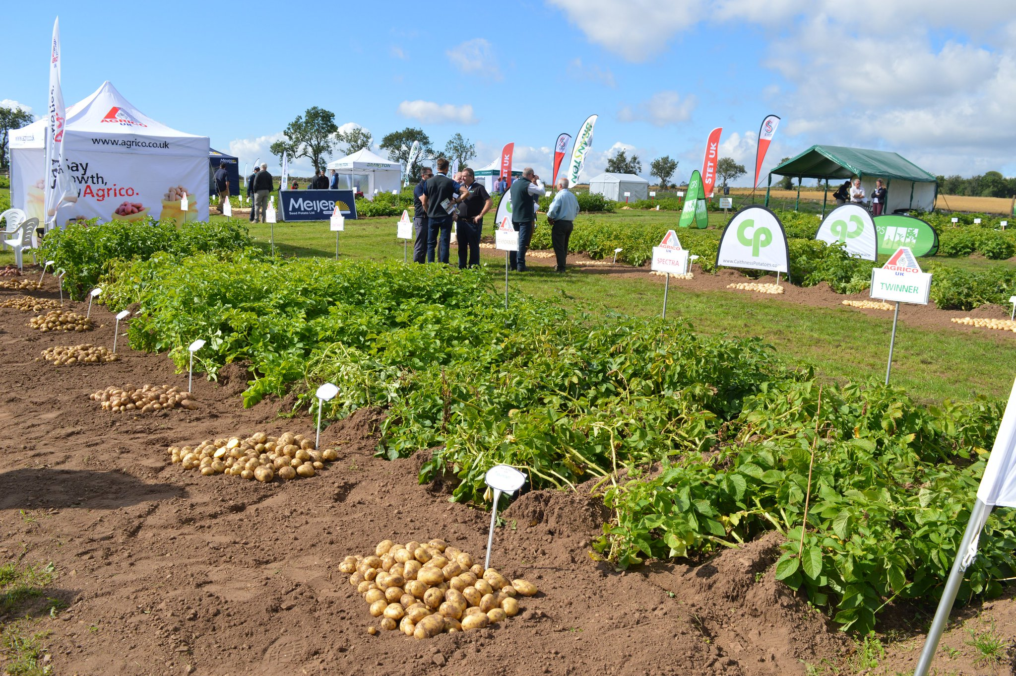Demonstration plots at Potatoes in Practice